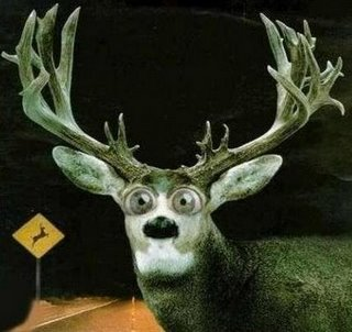 Deer-in-Headlights