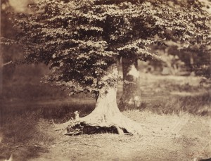Gustave Le Gray (photographer) [French, 1820 - 1884] from the J. Paul Getty Museum
